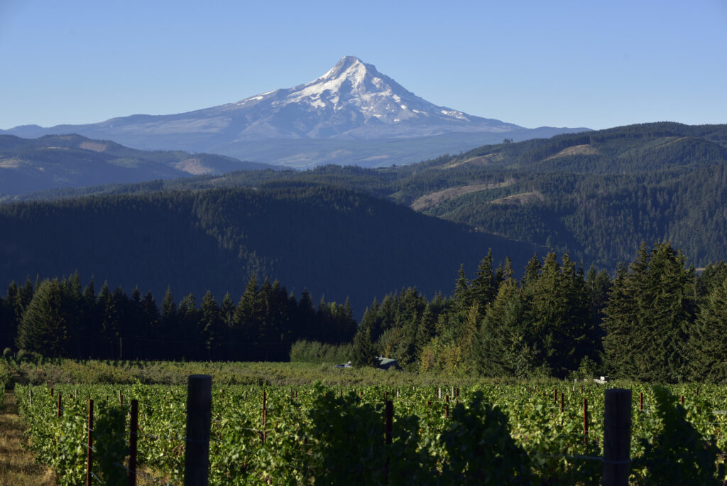Exploring the Diverse:  Wines Within the Columbia Gorge Wine Region