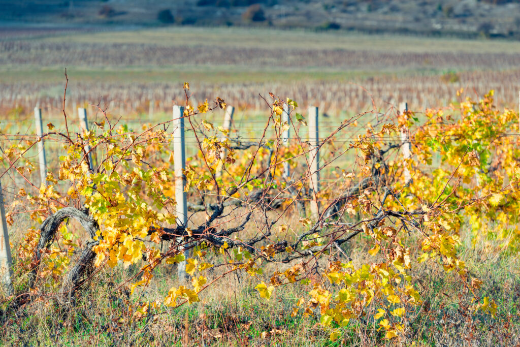 How Vineyards Should Tackle the Task of Dormant Weed Control