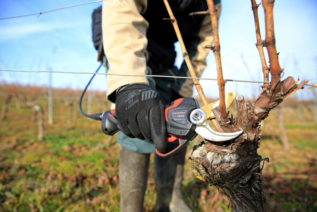Winter Pruning Tips Prepare Your Vineyard For Success The