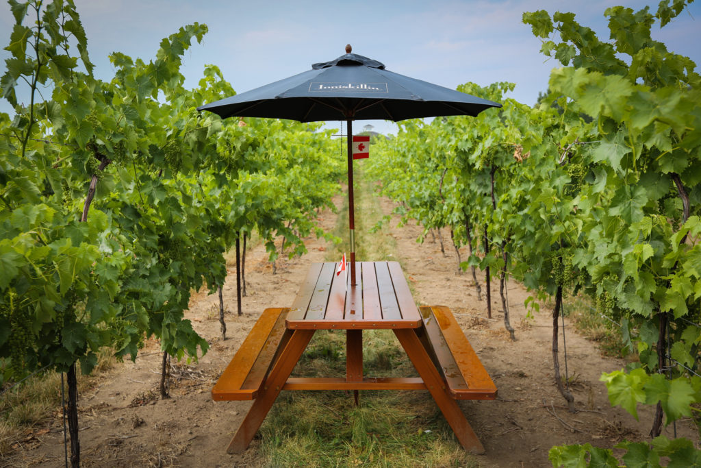 Why You Like Ontario Wine But Just Don't Know It