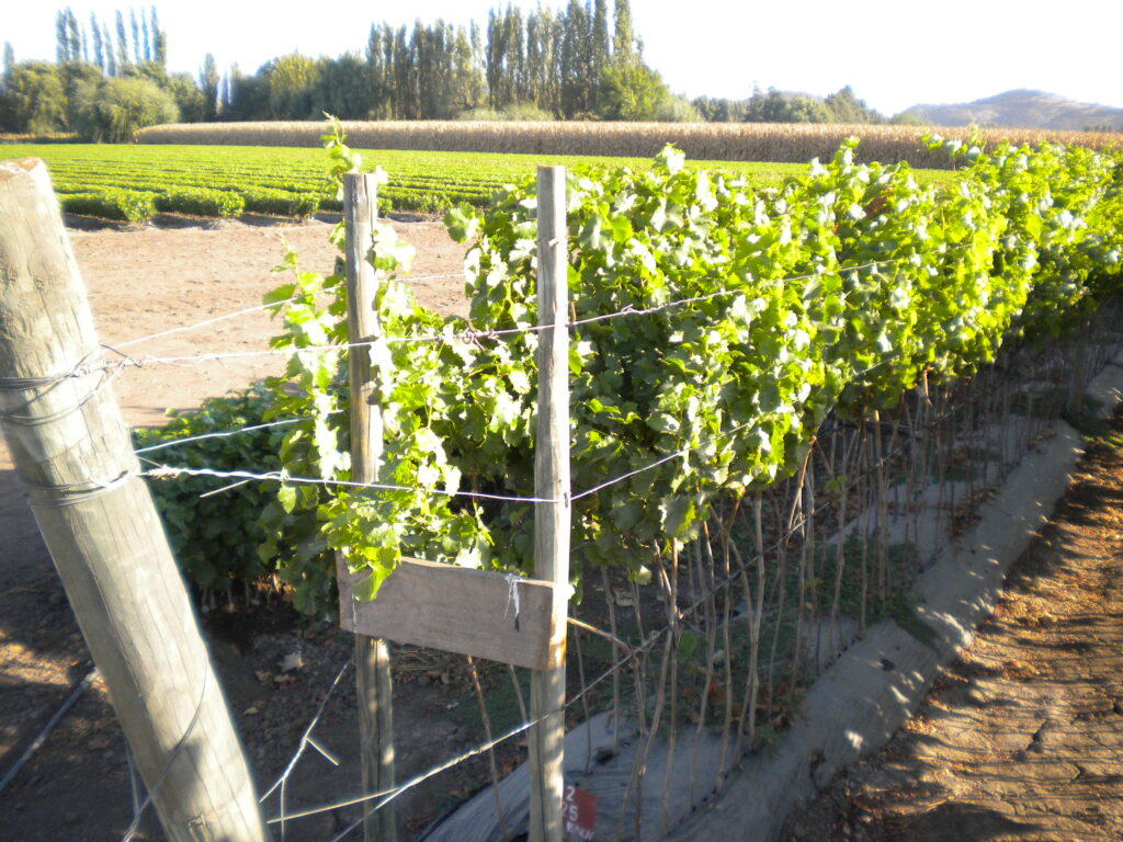 Grapevine Plant Quarantine and Certification Programs