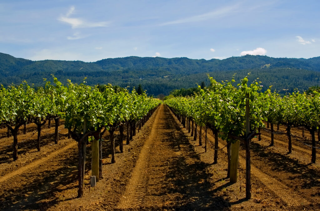 Carbon Farming for Successful Vineyard Systems