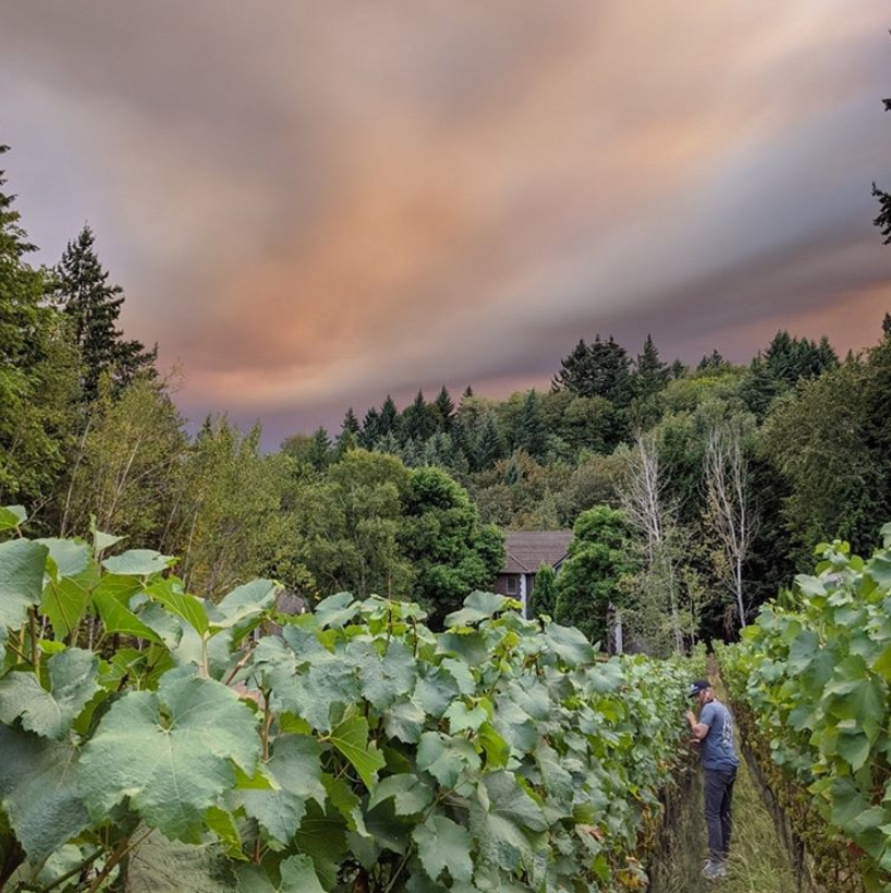Impact of the 2020 Wildfires on the Oregon Wine Industry