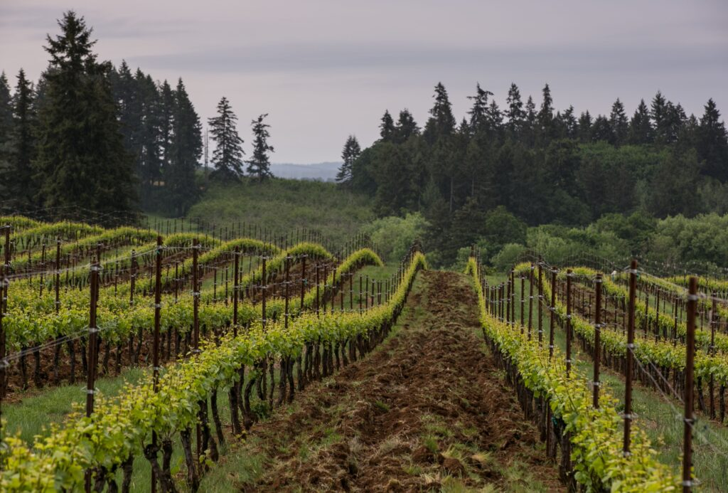 Farming & Making Alternative Varieties for a Changing Climate