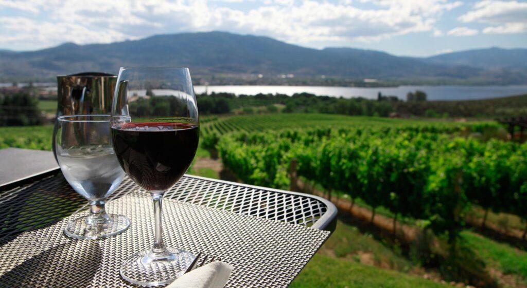 Defining the Best Single-Vineyards in the Niagara Peninsula
