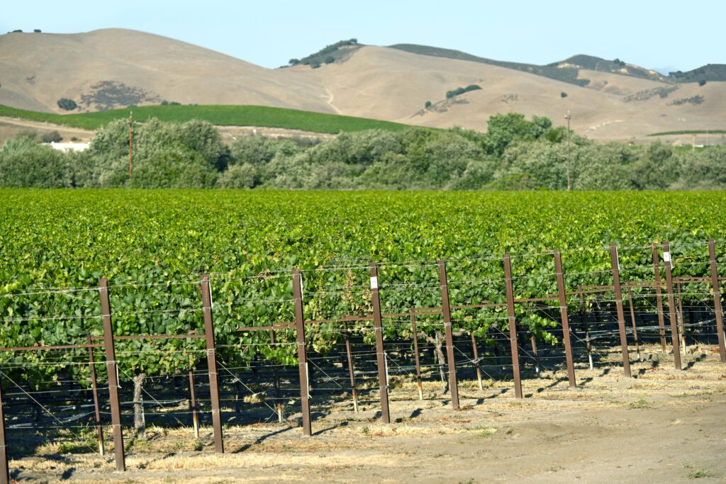 Biologicals, Organics And The Sustainable Vineyard