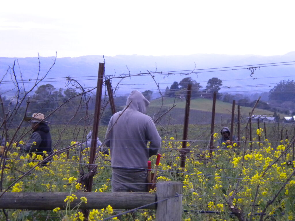 How Vineyard Management Adapted to the COVID-19 Pandemic
