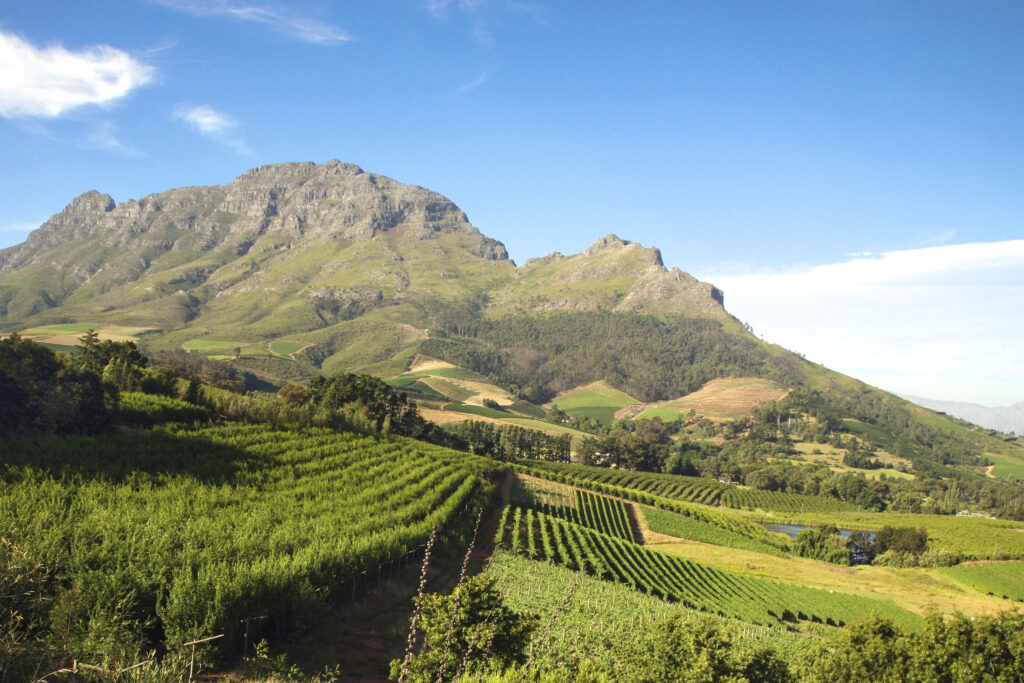 The South African Winelands: A Story of Endurance